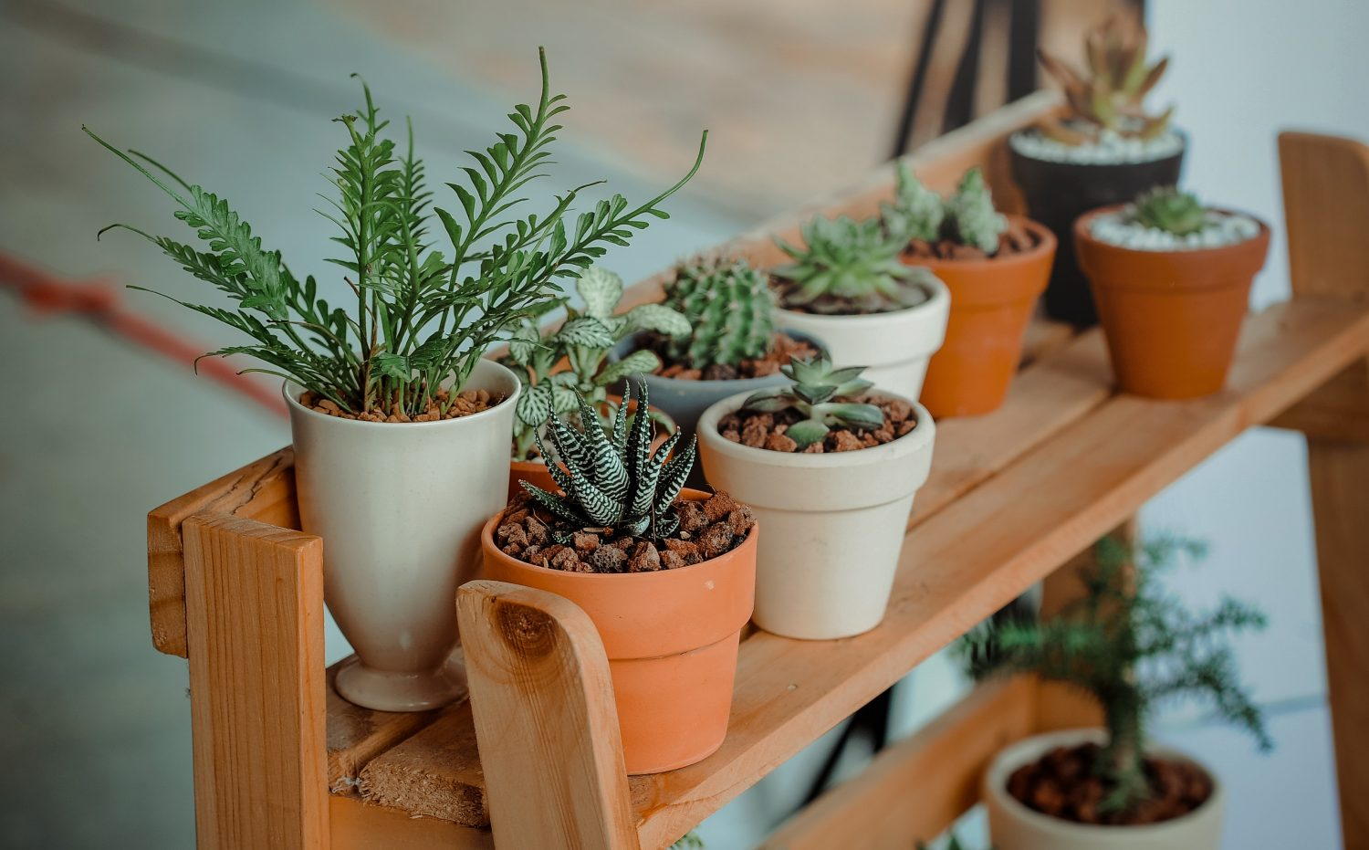 Tips to keep in mind when moving houseplants