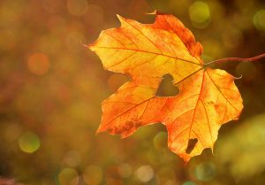 Image of a autumn leaf