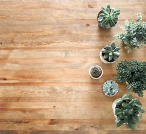 Potted plants on a wooden floor.