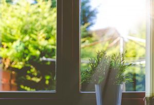 A plant on a window. When moving your home garden, keep in mind the conditions of your new house.