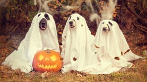 pets dressed for Halloween