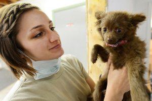 a vet holding a puppy