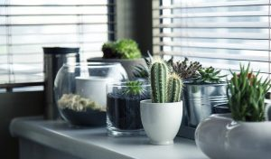 Cactus, getting some cacti is a gerat way to add a personal touch to a new home