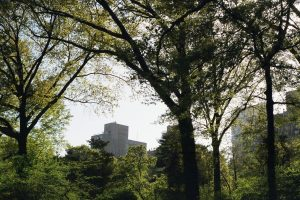 Trees in New York City