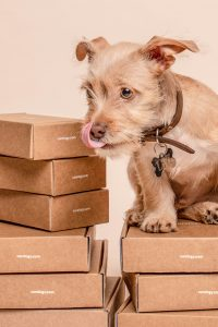 A dog with moving boxes