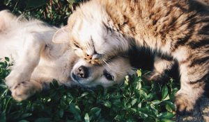 cat and dog in the grass