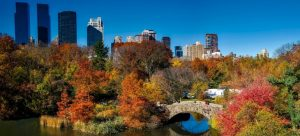 Picture of Central Park