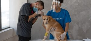 veterinarian examining a dog while a woman is holding him